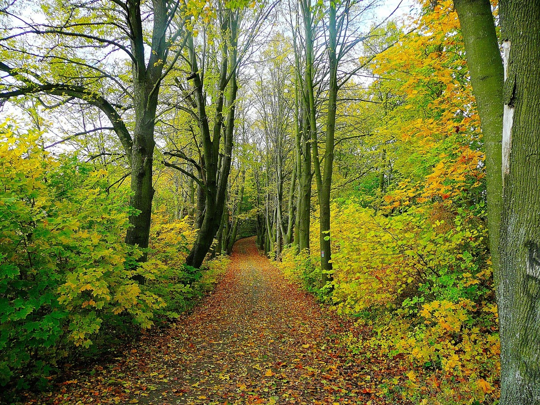 Nature in Czechia