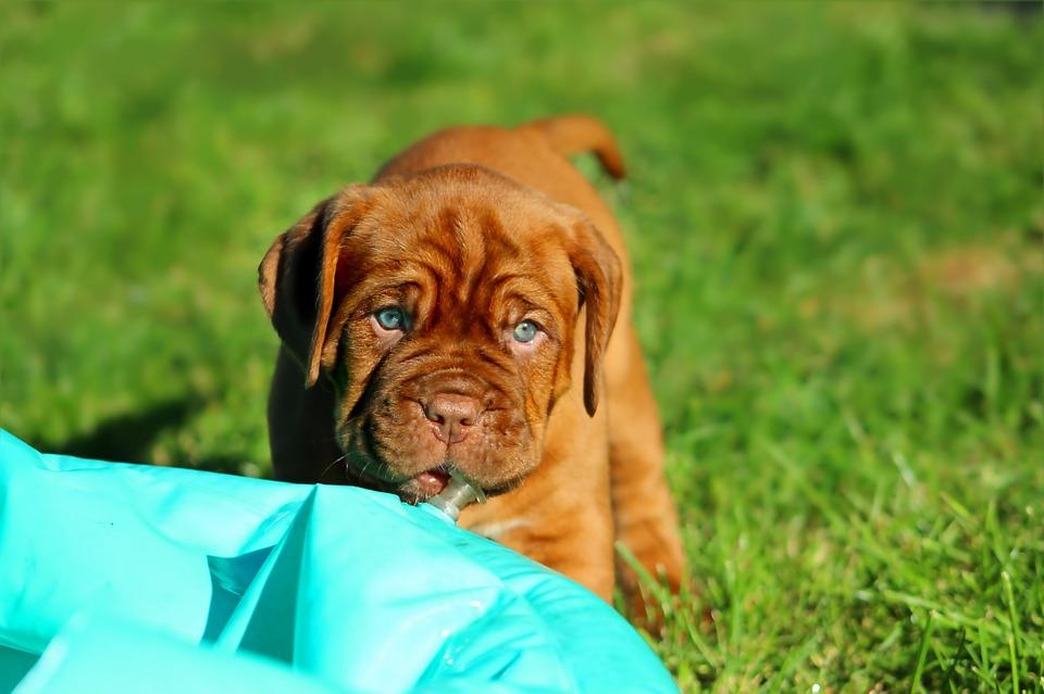 puppy-742620_960_720.jpg